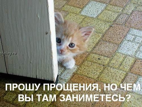 http://de.trinixy.ru/pics2/20070622/kotofej_29.jpg