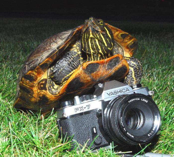 Подборка прикольных картинок (100 фото)