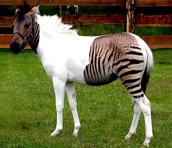 Новый вид животных?