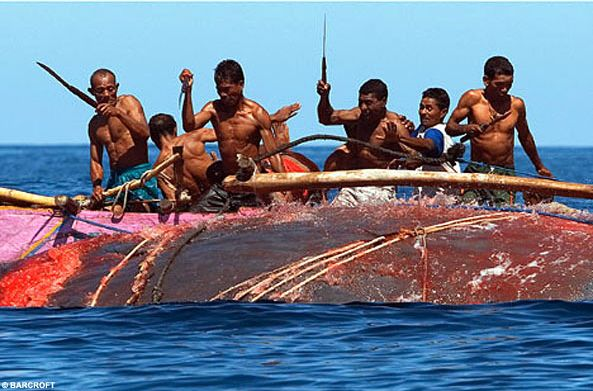 ЖЕСТЬ! Охота на кита (5 фото)