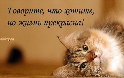 О чем думают коты - ЧАСТЬ 2 (31 фото)