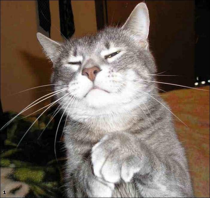 http://trinixy.ru/pics2/20070710/podb/5/cats_17.jpg