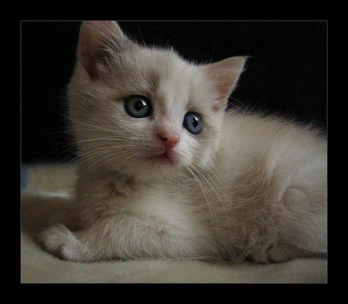 Попозитивим немного? Подборка фотографий котят (41 фото)