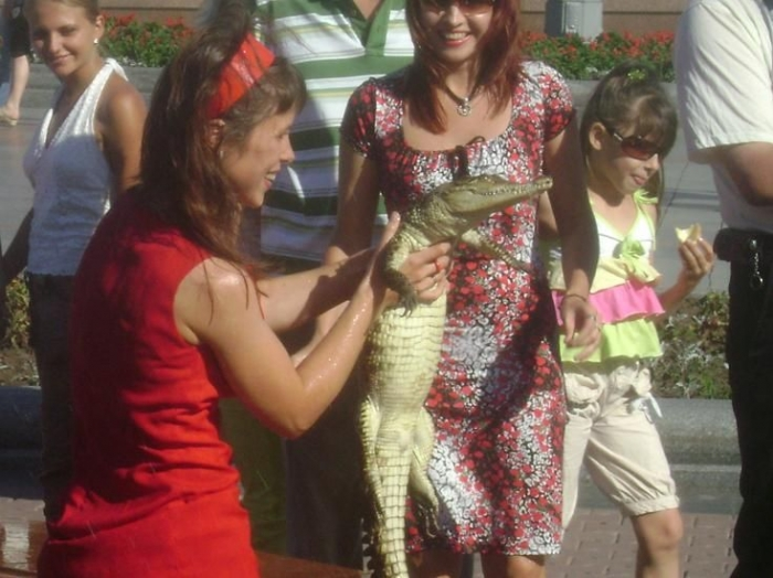 Ручной крокодил в Хабаровске (вроде как) (3 фото)