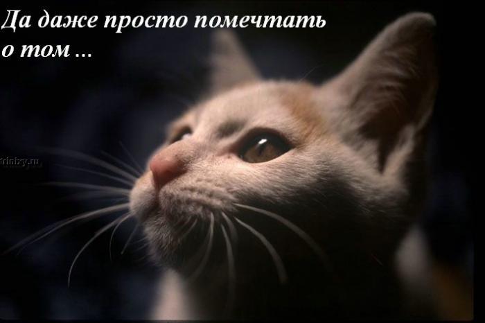 Размышления о жизни (19 фото)
