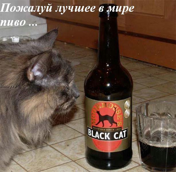 Коты и пиво (11 картинок)