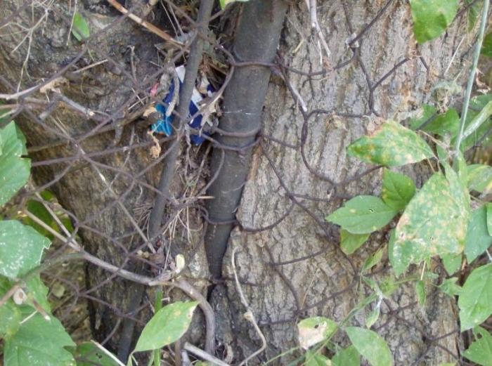 Чем питаются деревья