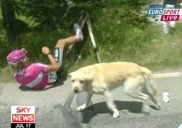 Столкновение с собакой (4 фото + видео)