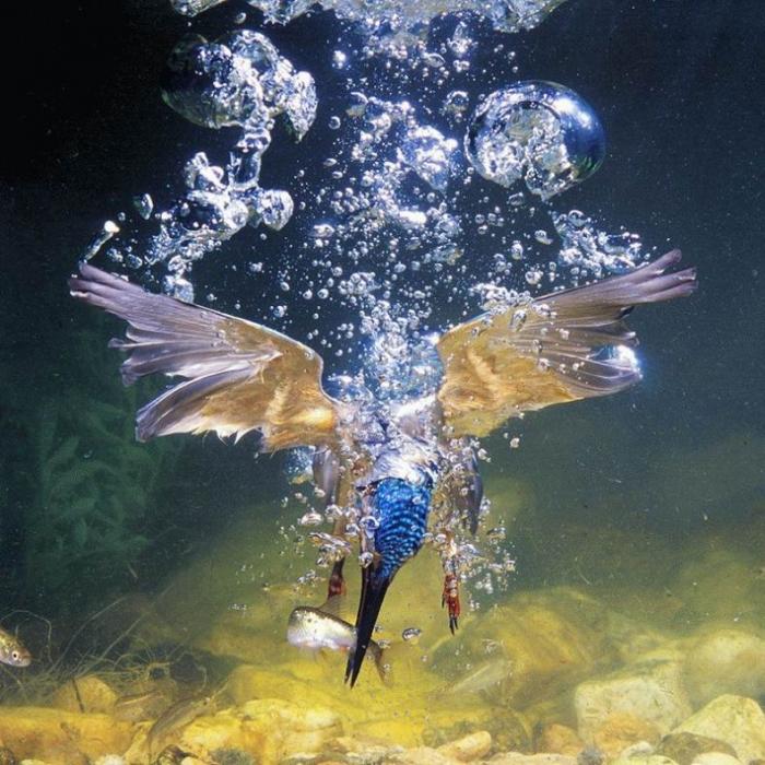 "Охота класса ""воздух-вода"" (5 фото)"