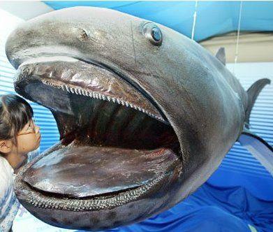 Самые Невероятные Морские Чудовища (Фото)