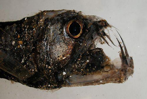 Морские чудовища (53 Фото)