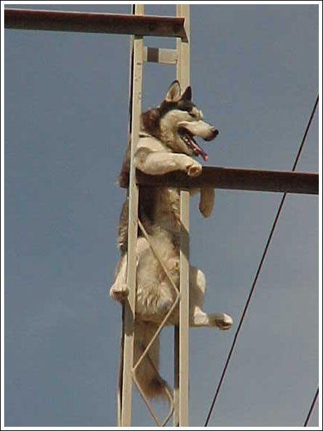 Чем накурили собаку? (8 фото)