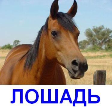 Ахтунг на лошади (3 картинки)