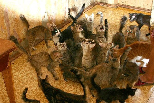 Кошачий Бухенвальд. Бедные кошки (( (11 фото)