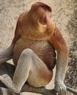 Самые удивительные животные (27 фото)