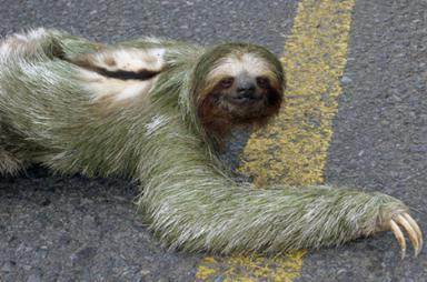 Самые странные существа на планете (38 фото)