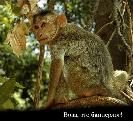 Вова, это БАН (47 картинок)