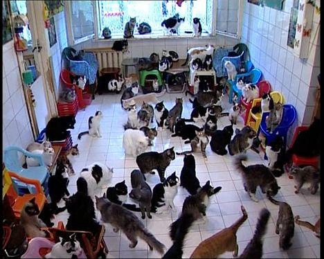 Кошачье общежитие (3 фото +видео)