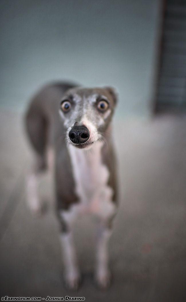 Смешные картинки собак 7