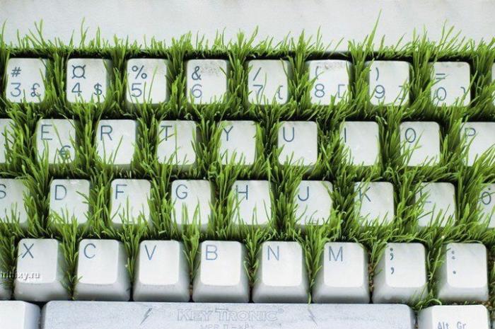 Ух! Трава в клавиатуре (3 фото)