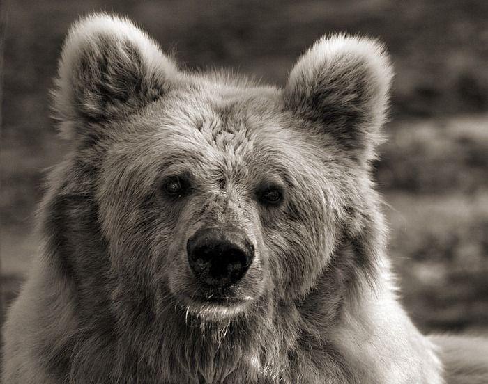 Эмоции животного мира (46 фото)
