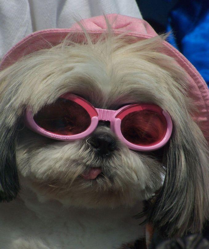 Показ моды для домашних животных (15 фото)