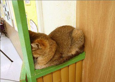 Коты (22 стереокартинки)