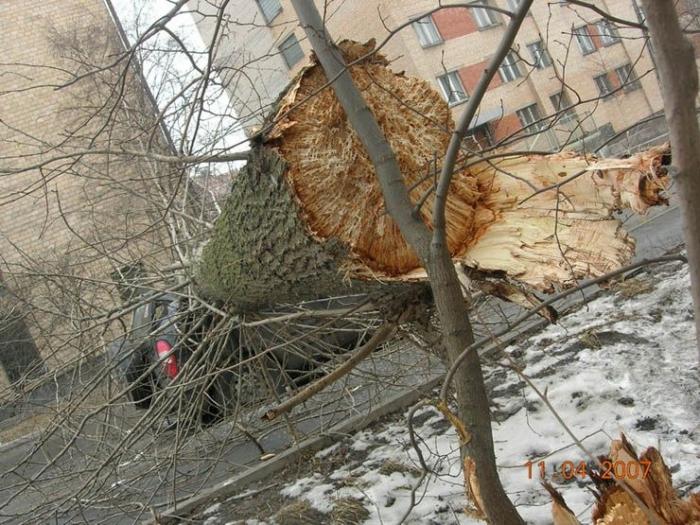 Третья российская беда (7 фото)