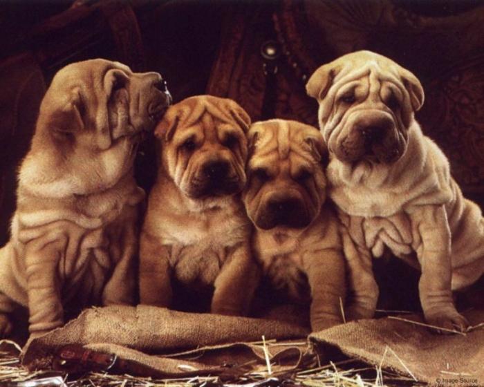 Забавные щенки и собаки (43 фото)