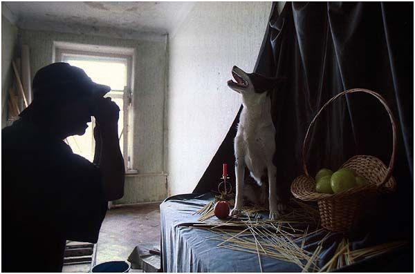 Лариса Ваше Собачество (10 фото)