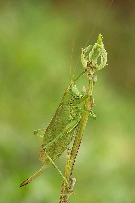 Макрофотографии насекомых (30 фото)