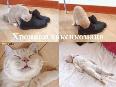 О чем думают коты. Для чайников. Часть 2 (30 фото)