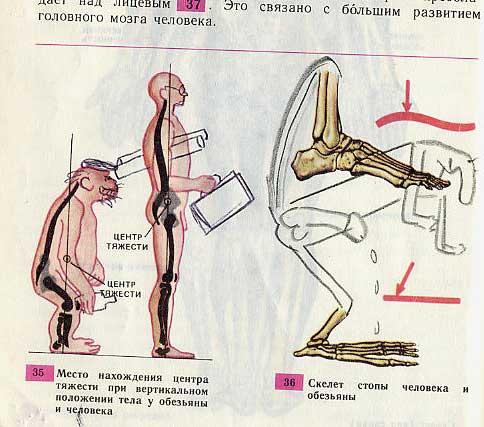Учебник по биологии (34 фото)