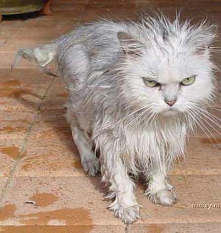 wet_cats_12.jpg