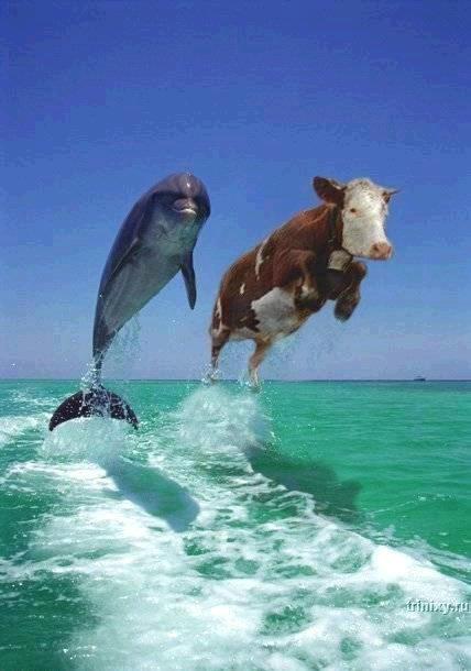 http://trinixy.ru/pics2/20070919/dolphins.jpg