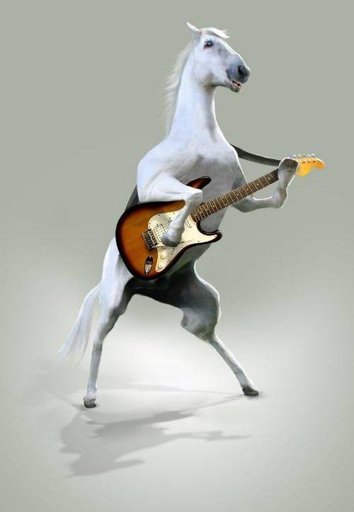 Животные-музыканты.