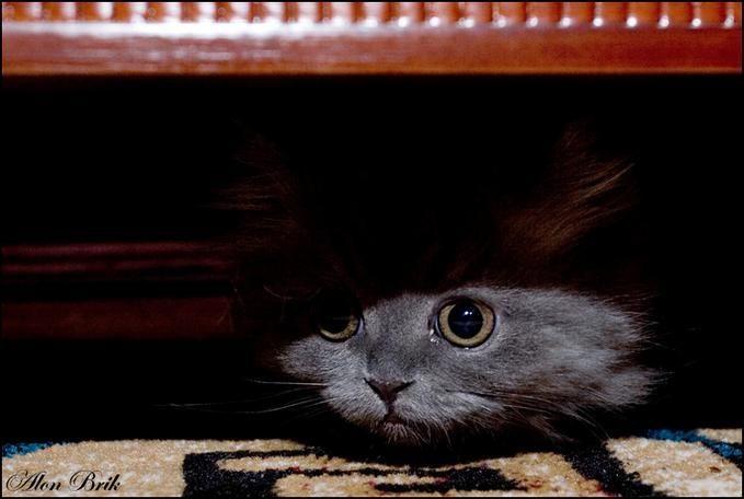 Классные коты и котята (62 фото)
