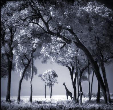 Величие и реконструкция природы (216 картинок)