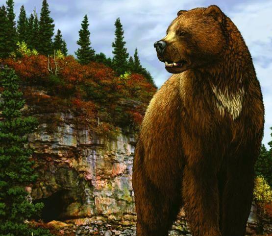 Гигантский короткомордый медведь был одним из самых крупных хищников...