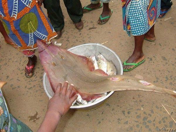 Африканская еда (14 фото)