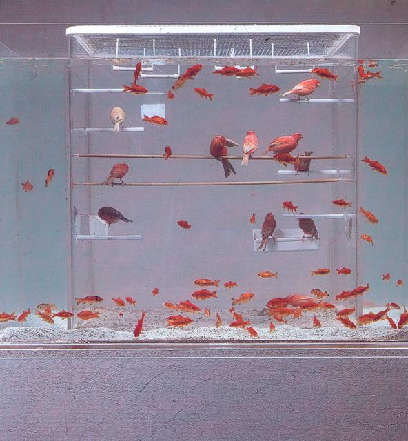 Что будет, если объединить клетку для птиц с аквариумом?