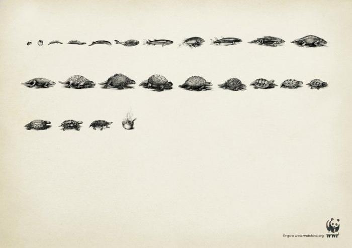 WWF - за живую планету! (33 постера)