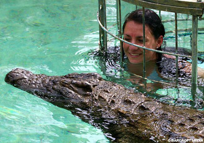 Купание с крокодилами (4 фото)