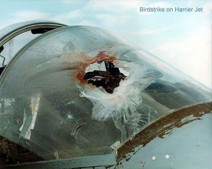 Самолеты против птиц (8 фото)