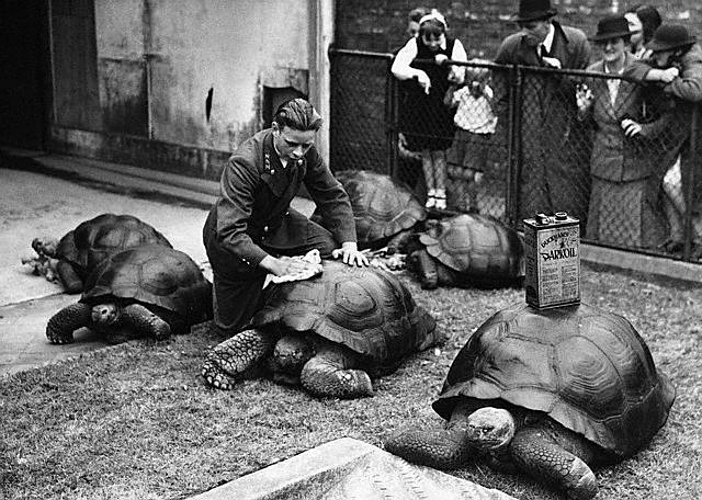 Удивительный Лондонский зоопарк (18 фото)