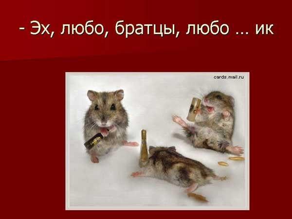 Стадии опьянения (12 картинок)