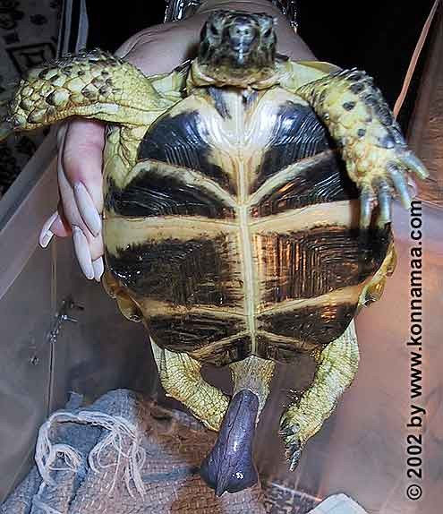 Метки. turtle. before. They're really funny phuckers! Animals. We