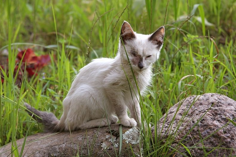 Добрые люди подобрали котенка на улице...  (20 фото)