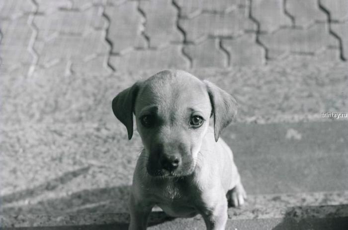 Забавные щенки (92 фото)