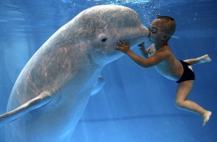 Китайский мальчик и белуха - друзья навсегда (6 фото)